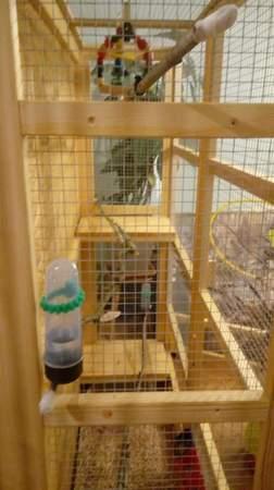 Woliery dla ptaków szerokość 100 cm głębokość 50 cm (5)