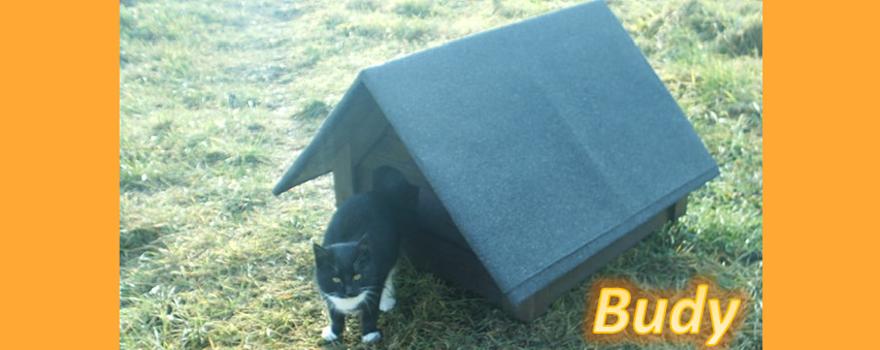 Budy dla psów i kotów